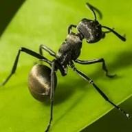 蚂蚁:地下王国图标